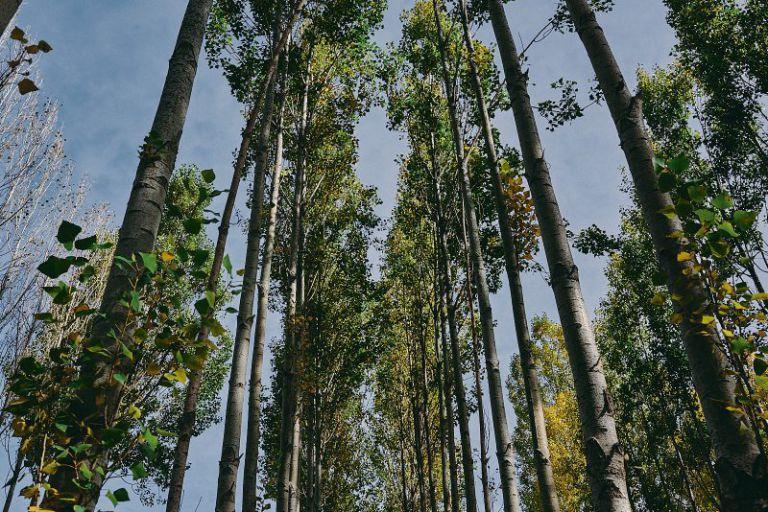 Bäume die in den Himmel ragen.