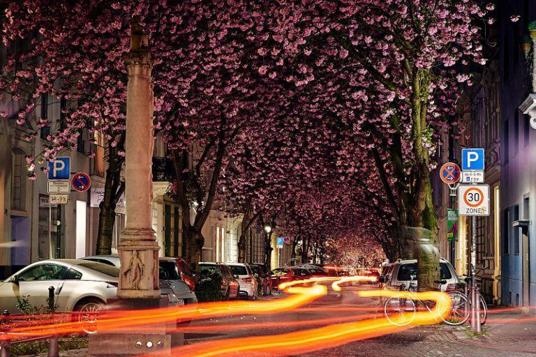 Langzeitbelichtung mit Kirschblüten und Lichtspur.