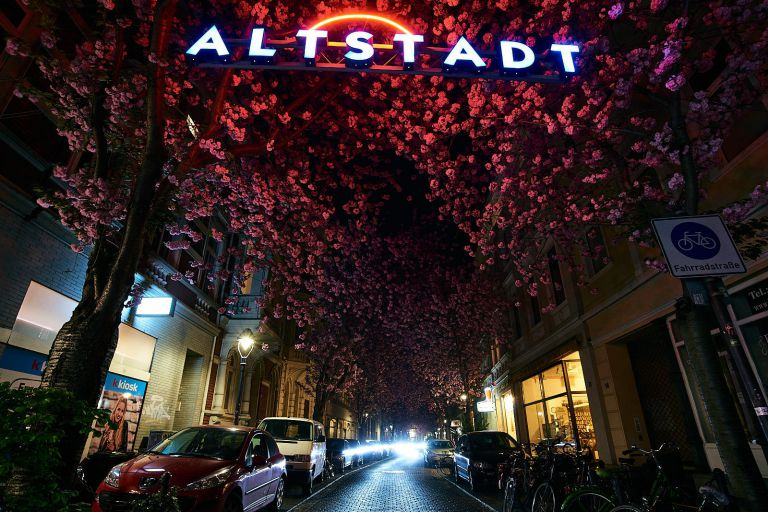 Kirschblüten am Bonner Altstadttor