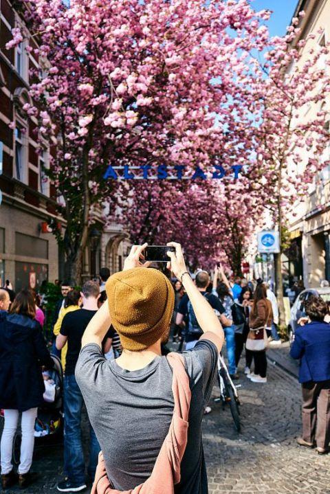 Ein Mann fotografiert Kirschblüten.