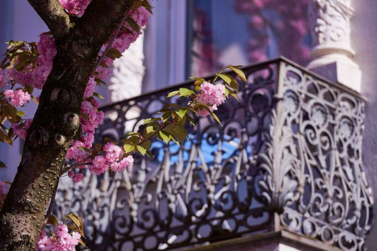 Ein Balkon eingerahmt von Kirschblüten.
