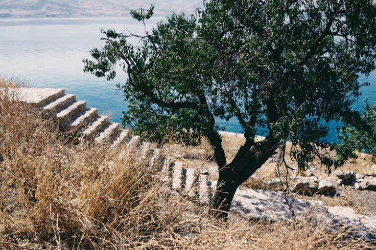 Ein Baum auf der Insel.